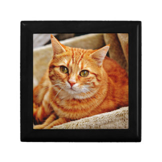 Cute Orange Cat Gift Box
