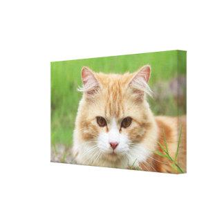Cute orange cat laying in grass canvas print