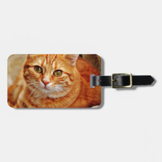 Cute Orange Cat Luggage Tag