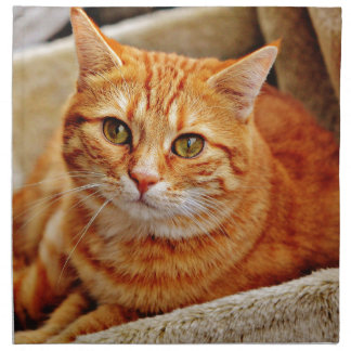 Cute Orange Cat Napkin