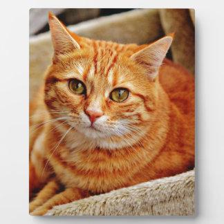 Cute Orange Cat Plaque