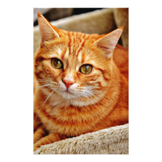 Cute Orange Cat Stationery