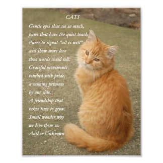 Cute Orange Kitten Kitty Cat Poem Photo Print