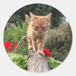 Cute Orange Kitten Stickers