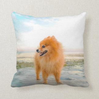 Cute Orange Pomeranian in Sand at Beach Decorator Cushion