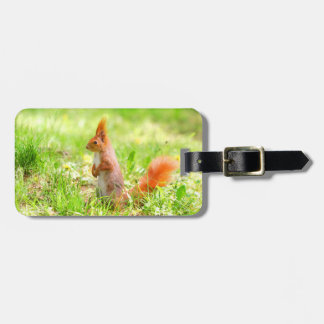 Cute Orange Squirrel Nature Wildlife Luggage Tag