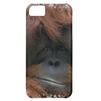 Cute Orangutan Face iPhone 5 Case
