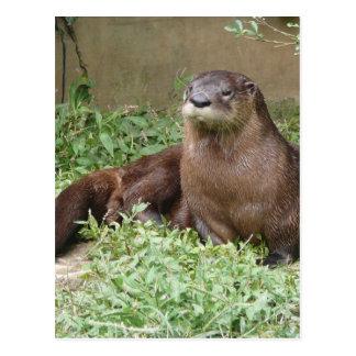 Cute Otter Postcard