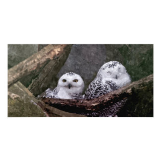 Cute Owls Picture Card