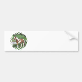 Cute Paint Pony Bumper Stickers