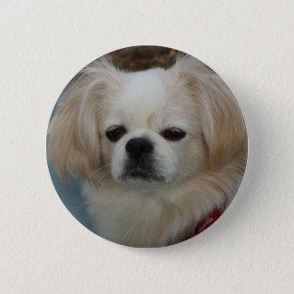cute Pekingese 6 Cm Round Badge