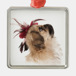 Cute Pekingese puppy Silver-Colored Square Decoration