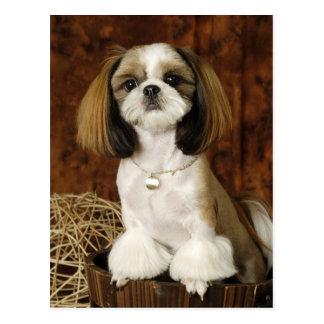 Cute Pet Animal Postcard