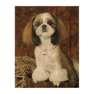 Cute Pet Animal Wood Print