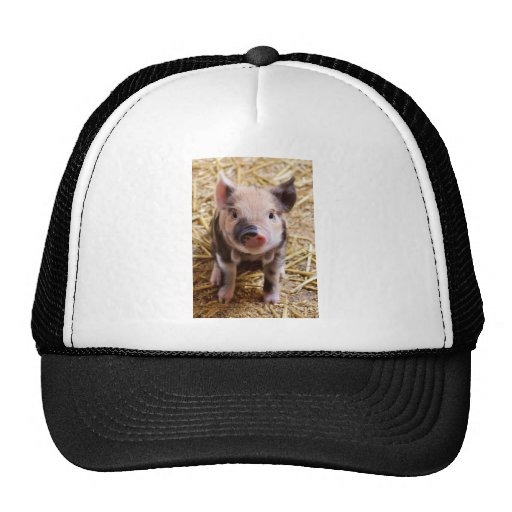 Cute Pic of a baby Pig Hat