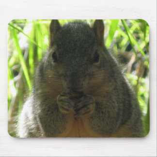 Cute picture of a little squirrel eating a nut mouse pad
