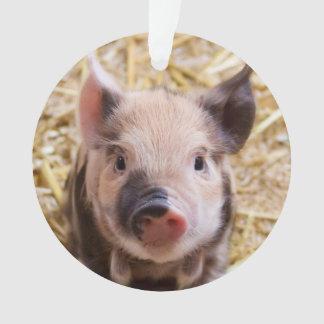 Cute piglet ornament