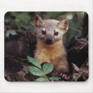 Cute Pine Marten Mousepad