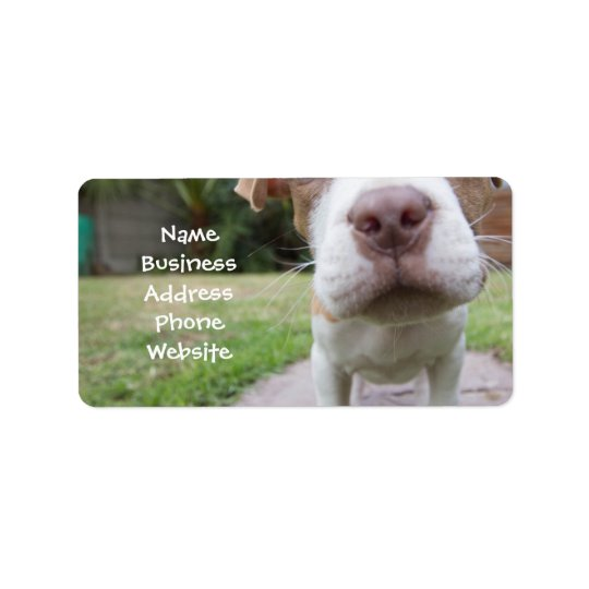 cute pit bull dog brown nose close label