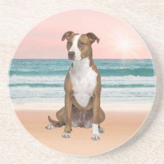 Cute Pitbull Dog Sitting on Beach with sunset Coaster