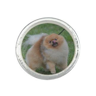 Cute Pomeranian Photo Rings