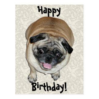 Cute Pug Dog Birthday Postcard