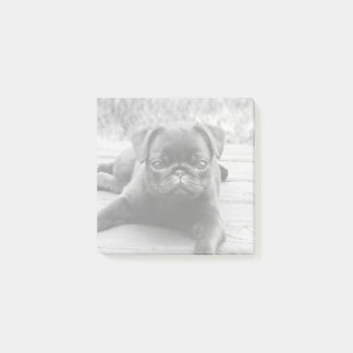 Cute Pug Puppy Dog Lover Black and White Photo Post-it Notes