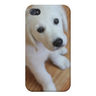 Cute puppy, adorable pup gift for any animal lover iPhone 4 case