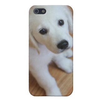 Cute puppy, adorable pup gift for any animal lover iPhone 5/5S cover