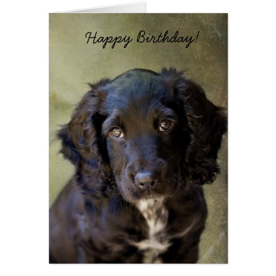 Cute Puppy card