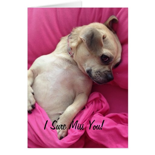 Cute Puppy Dog Chug Miss You Greeting Card