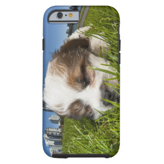 Cute puppy dog in park, Vancouver, BC, Canada. Tough iPhone 6 Case