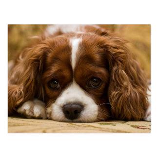 Cute Puppy Dog Postcard
