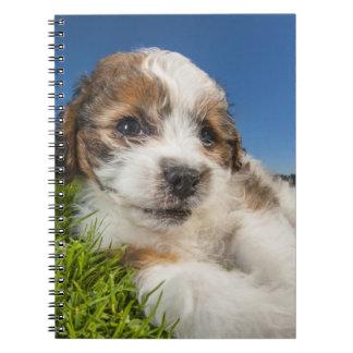 Cute puppy dog (Shitzu) Spiral Notebook