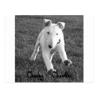 Cute puppy English Bull terrier collection Postcard