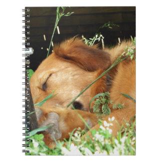 Cute Puppy Golden Labrador Retriever Sleeping Note Books