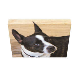 Cute Puppy Picture Canvas Print