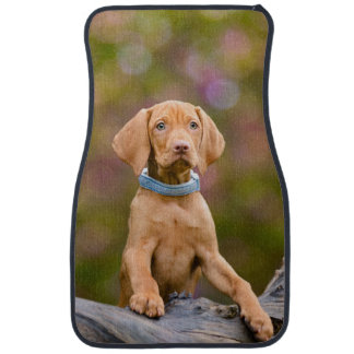 Cute puppyeyed Hungarian Vizsla Dog Puppy Photo on Car Mat