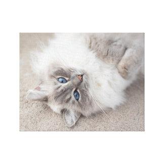 Cute Ragdoll Cat Canvas