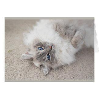 Cute Ragdoll cat Card
