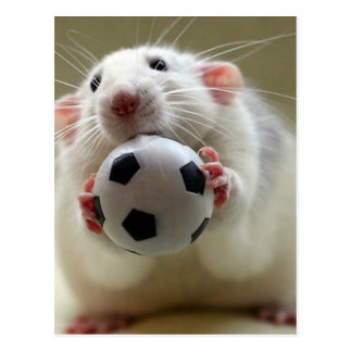 Cute rat playing soccer postcard