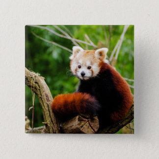 Cute Red Panda Bear 15 Cm Square Badge