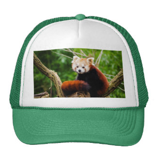 Cute Red Panda Bear Cap