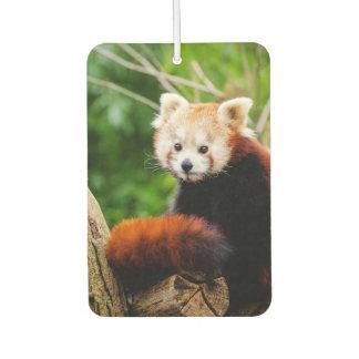 Cute Red Panda Bear Car Air Freshener