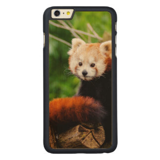 Cute Red Panda Bear Carved Maple iPhone 6 Plus Case