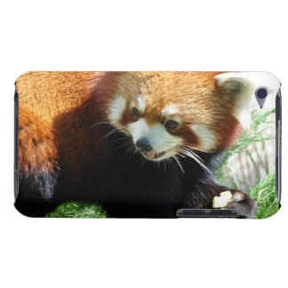 Cute Red Panda Bear iTouch Case