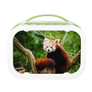 Cute Red Panda Bear Lunchboxes