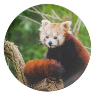 Cute Red Panda Bear Plate