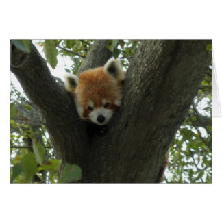 Cute Red Panda Note Card