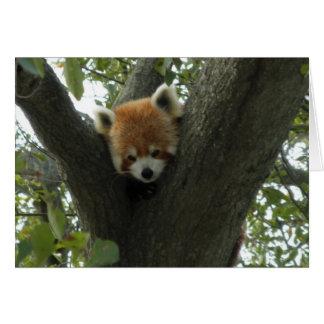 Cute Red Panda Note Card